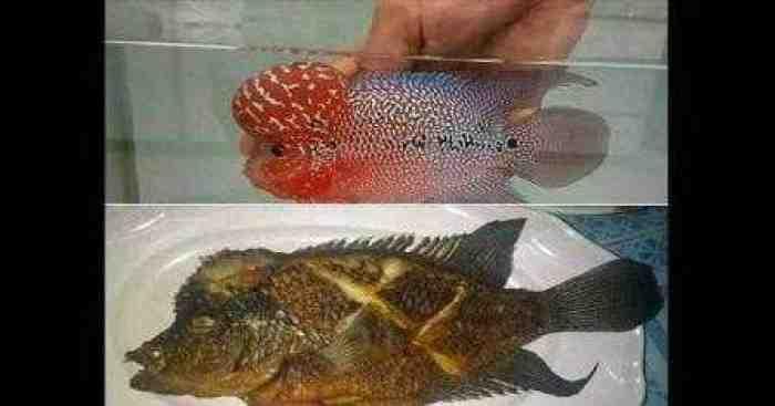 Tak Asal, ini Trik Khusus Goreng Ikan agar Matang Sempurna dan Sedap