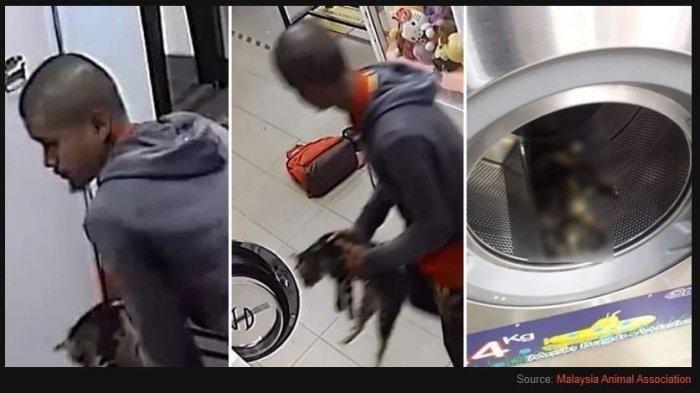 Sadis, Dengan Teganya Pria ini Masukkan 3 Kucing ke Mesin Cuci dan Menggilingnya