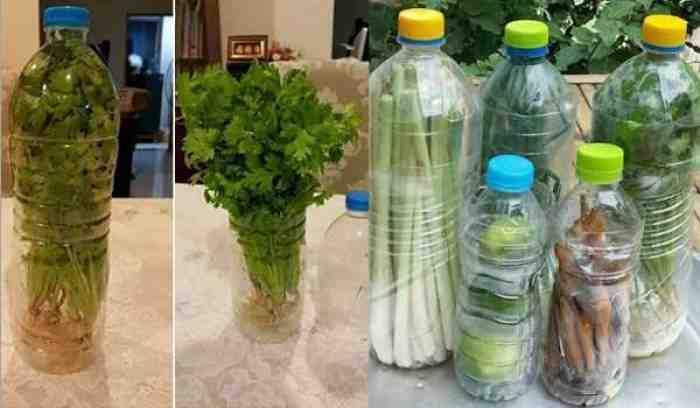 Cukup Dengan Cara ini, Sayuran di Rumah Bisa Awet Tak Cepat Busuk