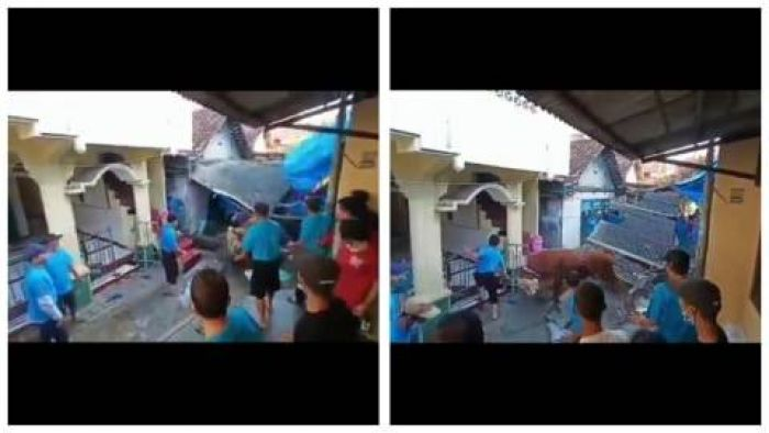 Detik-detik Sapi Kurban Mengamuk Atap Rumah Warga Roboh
